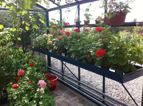 Plargoner i Margaretas växthus