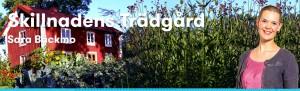 BLOGG_SKILLNADENSTRADGARD_bloggarpaland1